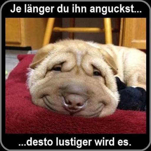 Download Lustige Bilder Kostenlos Fur Whatsapp 2020 Free For