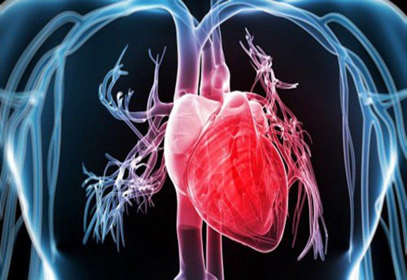 Rong biển hỗ trợ phòng ngừa bệnh tim mạch