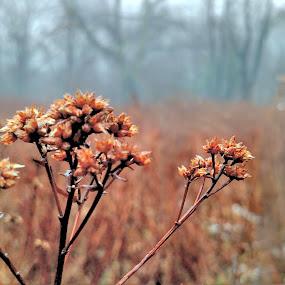 Little Life in a Dead Meadow by Mason Ablicki - Flowers Flowers in the Wild