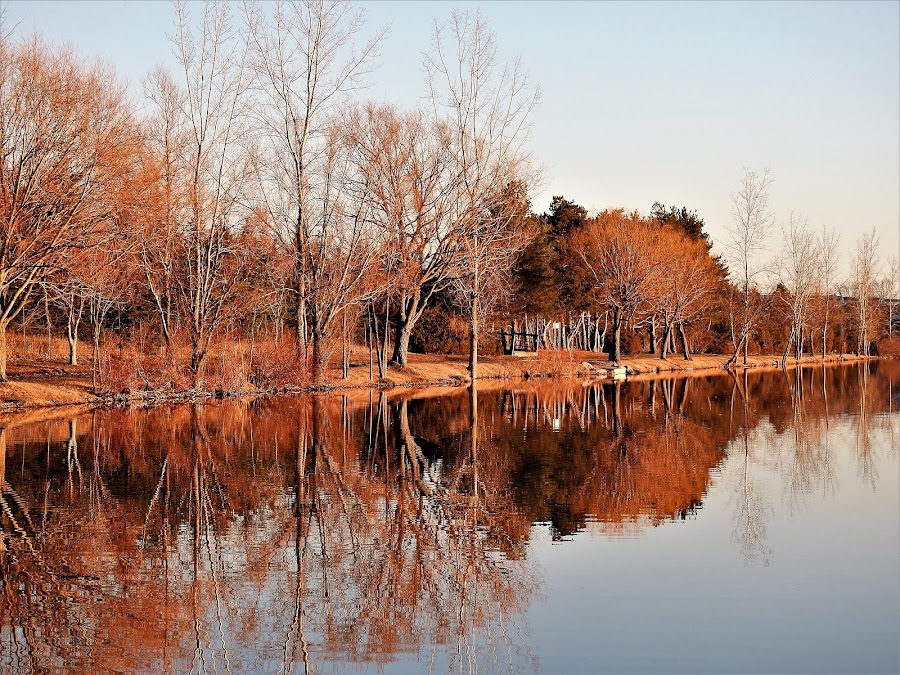 A Tall Bunch by Kathy Woods Booth - Landscapes Waterscapes ( mirrored reflections, tranquil, peaceful, waterscape, trees )