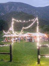 Photo: Fairy lights on for the picnic wedding