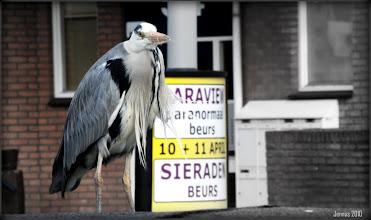 Photo: urban residents