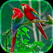 Lovely Birds LiveWallpaper