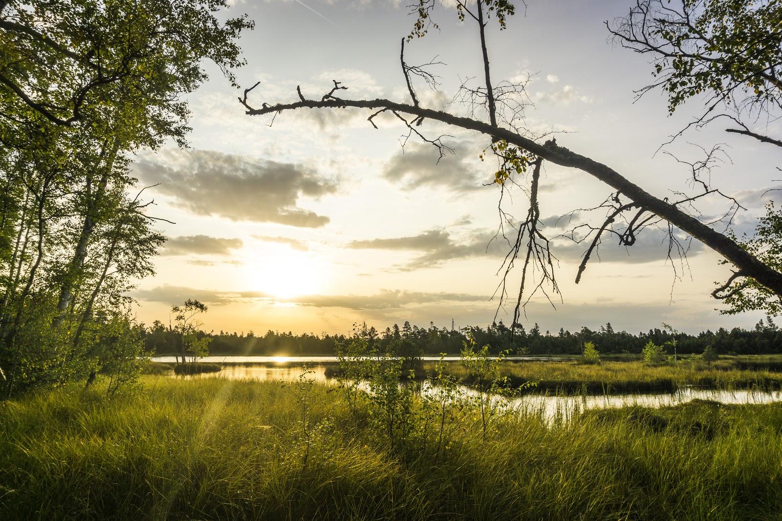 Der Wildsee am Kaltenbronn ist Deutschlands größtes Hochmoor