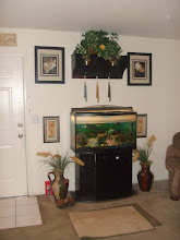 Photo: Stanley's Fish Tank
