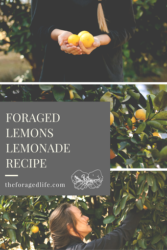 The simplest (3 ingredients!) lemonade recipe, made with foraged lemons | Foraging by The Foraged Life