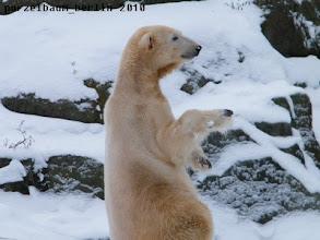Photo: Das Geburtstagskind Knut :-)