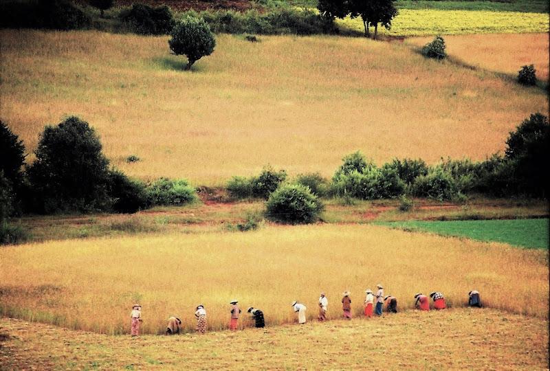 Il lavoro nei campi di paolo-spagg