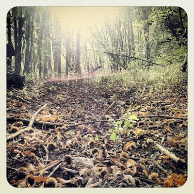 Nel bosco... di Nemeth