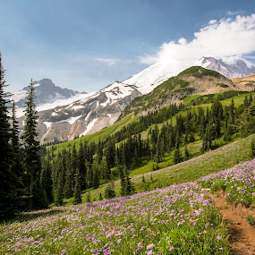 Mountain meadow by Dale Slater - Landscapes Mountains & Hills ( mountains, fragrant, beauty, flowers, hiking )