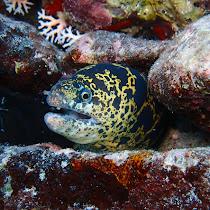 Wildlife of Bonaire