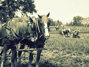 Photo: Old-fashioned photo of horses plowing a field at Carriage Hill Metropark in Dayton, Ohio.