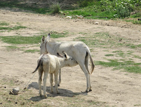 Photo: Day 141 - Donkey and Foal