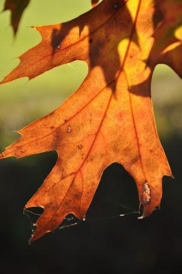 autunno visto da vicino di Dario Marzanni