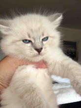 Photo: Quinlan - con cara de gatón... impresionante ;D (40 días)