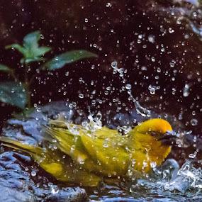 Taking a bath  by Johann Bekker - Novices Only Wildlife