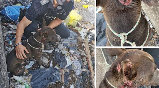 Arrojan un perro envuelto en una manta a un fuego en el Río Andarax