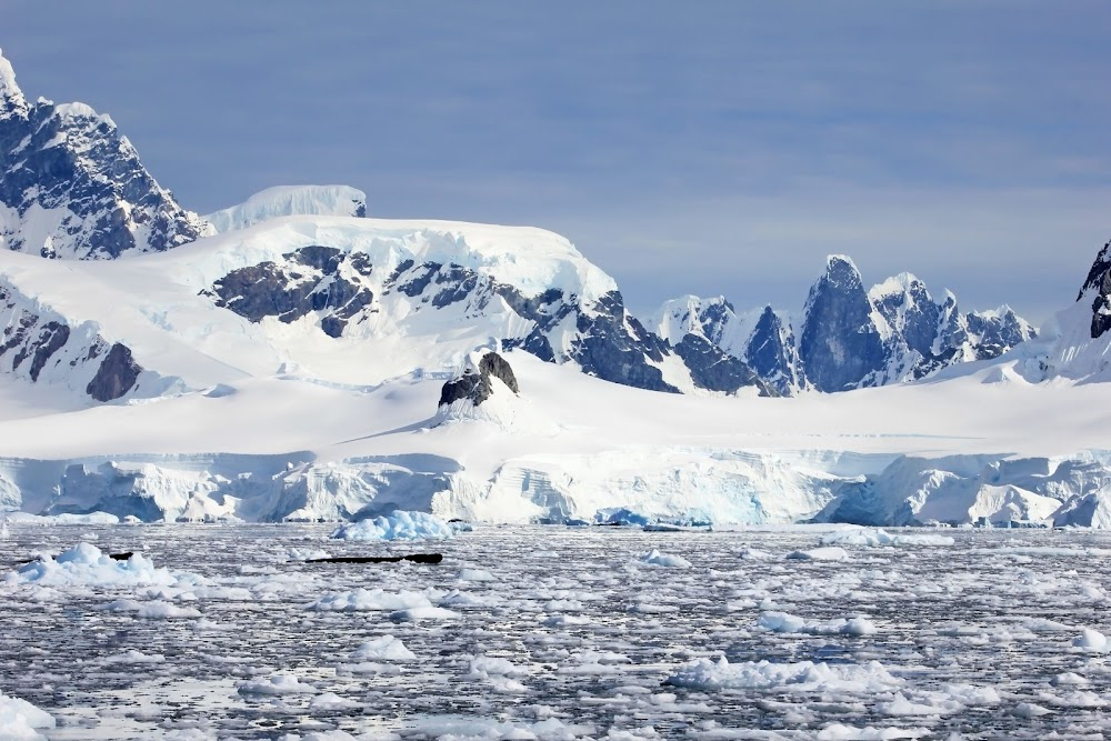 Parts of Antarctica turning green due to climate change, study finds - TimesLIVE