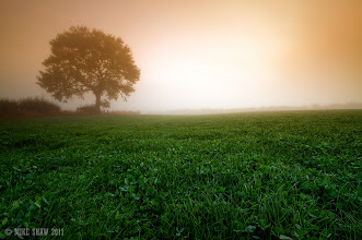 Photo: Another shot from this morning misty start, I have passed this feild of clover many times and have always wanted to photograph it but never had the right light and balance.  Its a simple shot but sometimes simplicity works.