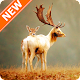 Download Deer Wallpapers HD For PC Windows and Mac