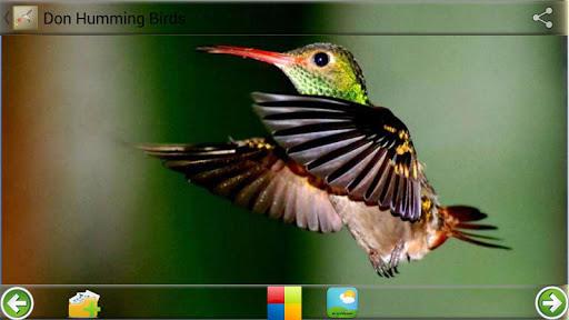 Don Humming Birds