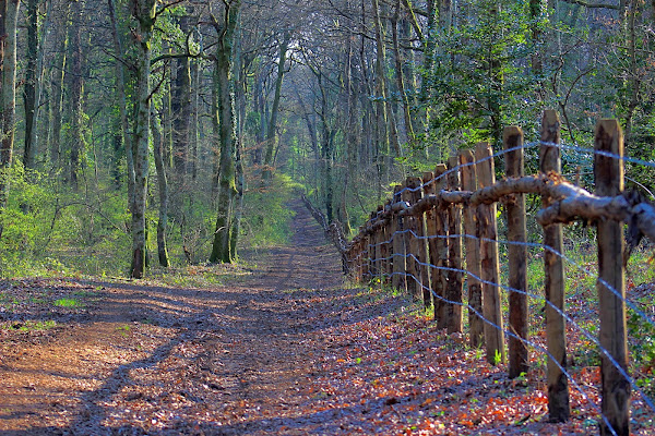 Una strada nel bosco di twinings211