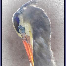 Great Blue Heron by Dawn Hoehn Hagler - Digital Art Animals ( bird, great blue heron, desert museum, arizona, digital art, tucson, oil paint, photoshop )