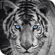 Hd Colorful Tiger Wallpapers Jaguar Apps On Google Play