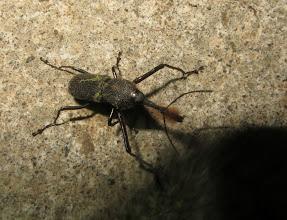 Photo: Beetle