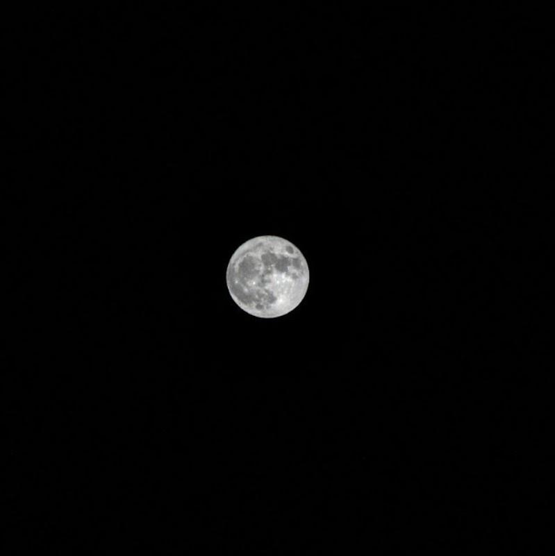 La luna è un usignolo muto di FrancescaWagnerL