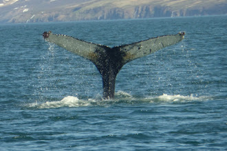 Photo: Humpback whales put on a wonderful show!