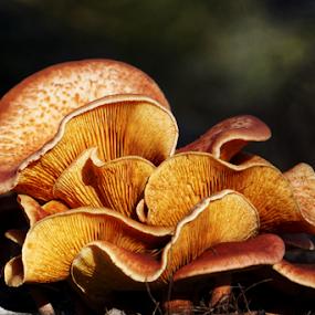 Waves  by Todd Reynolds - Nature Up Close Mushrooms & Fungi