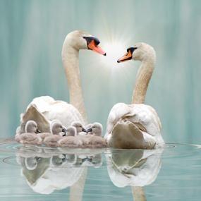 Swan Family Reflection  by Robin Amaral - Digital Art Animals ( artography, swans, swirling water, reflection, cygnets, wildlife, birds, imaginative )