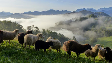 Photo: October; our sheep on a misty morning