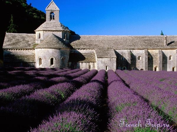 Лавандовые поля Прованса 10 лучших достопримечательностей Франции