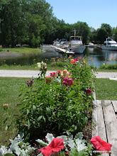 Photo: Flowers at the Burton Island marina by Sara Hayes