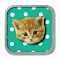 Musical Kittens file APK Free for PC, smart TV Download
