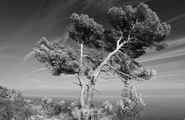 Piegato dal vento di MicheleSpadafina