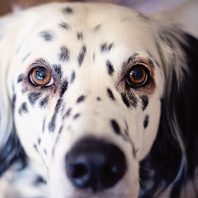 by Susan England - Animals - Dogs Portraits