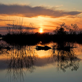 by Siniša Almaši - Nature Up Close Water ( water, natural light, up close, nature, silhouette, sunset, trees, lake, view, landscape, light, colours )