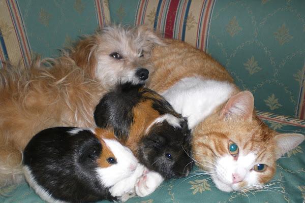 Non solo cani e gatti di danilo56
