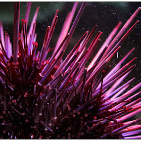 Spike Red by Noah ONeill - Animals Sea Creatures