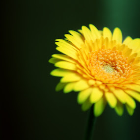 flower by Elisa Abiog - Nature Up Close Flowers - 2011-2013