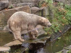 Photo: Knut bringt wieder den Schlauch ins Spiel :-)