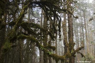 Photo: forêt sur Chyasingbare danda