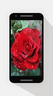 زهور عيد الحب 2017 - náhled