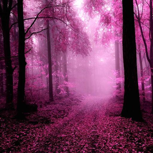粉红色的森林动态壁纸