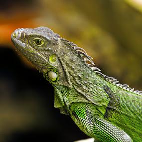 by Edwin Madera - Animals Reptiles