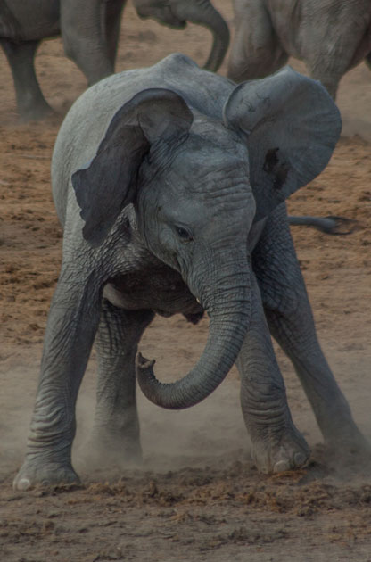 Elephant4-JNDW.jpg