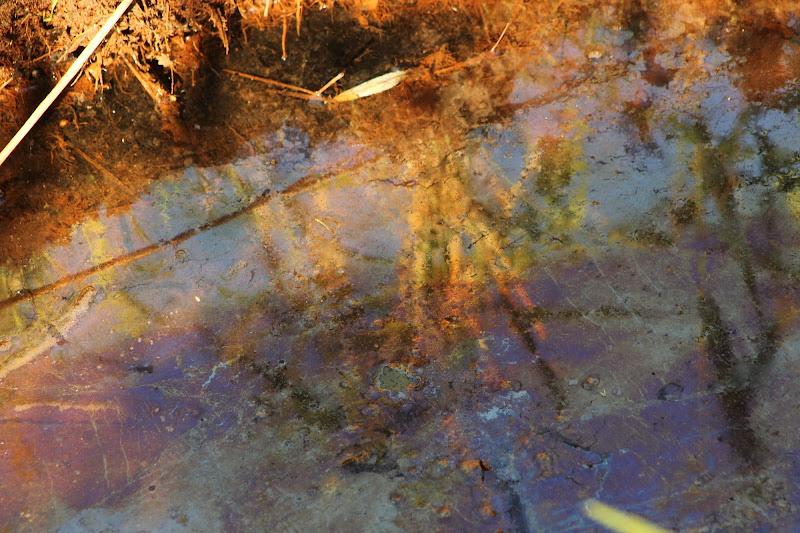 Contrasto di liquidi di nicolamelottophotography